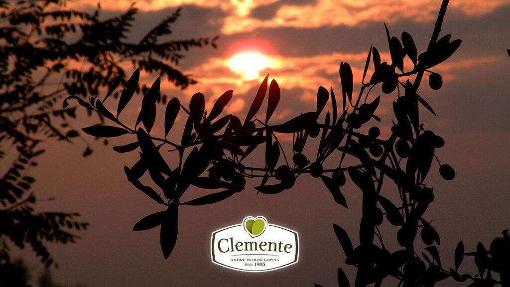 Autunno, olio nuovo Clemente